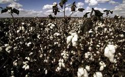 """Sourcing more sustainable cotton is the best way forward"""