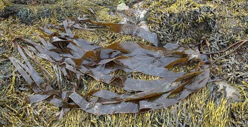 Sustainable textile innovations: bio yarn made from kelp fibres