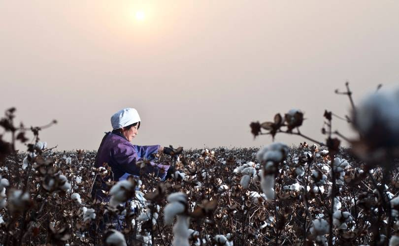 Leading brands progress on cotton sustainability falls short