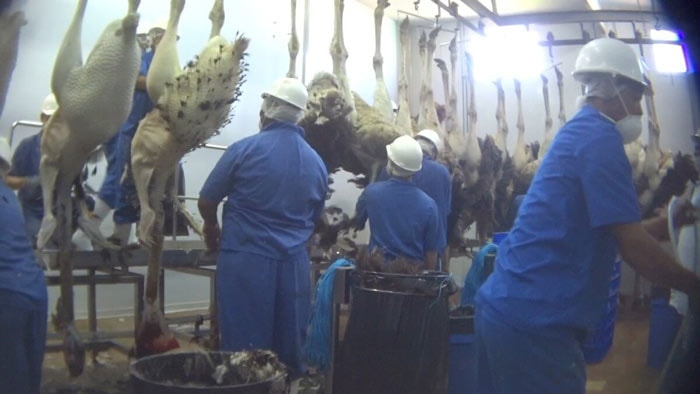 PETA reveals abuse at Ostrich suppliers for Prada and Herm¨¨s